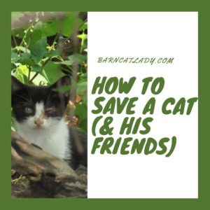 How to Save a Cat (& His Friends)
