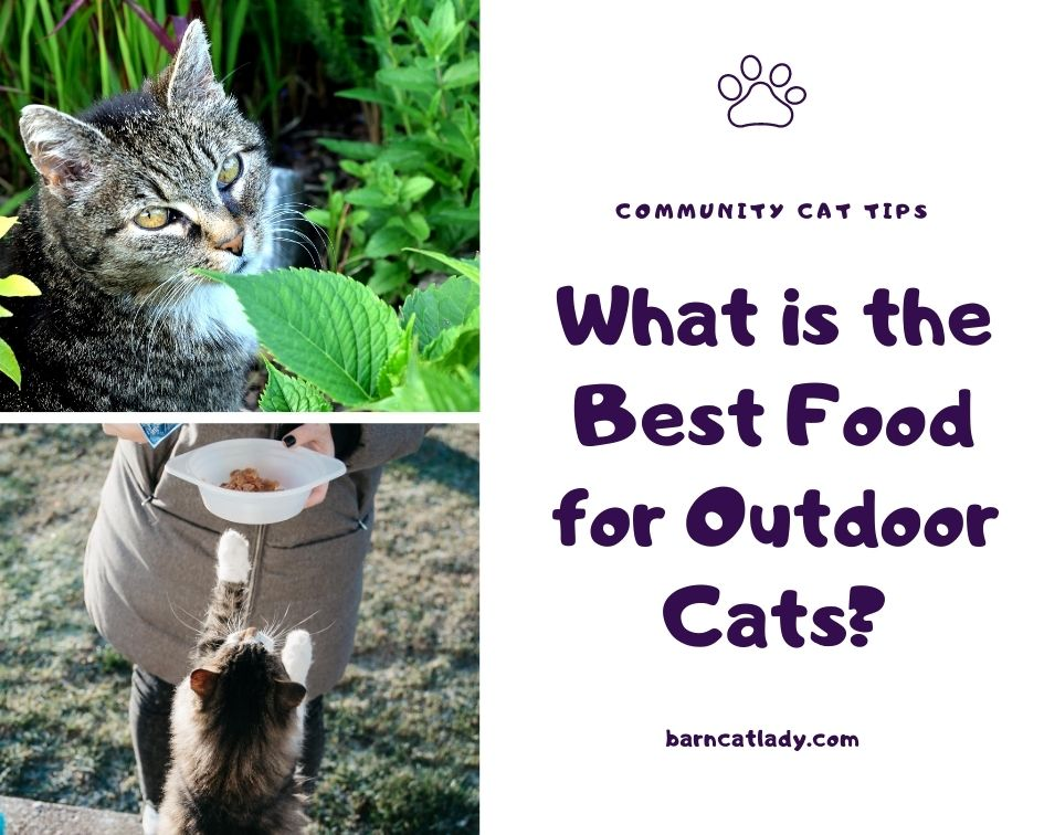 What is the Best Food For Outdoor Cats Graphic