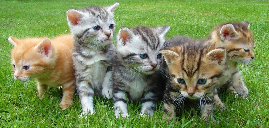 Five Kittens Born Outdoors to a Feral Cat