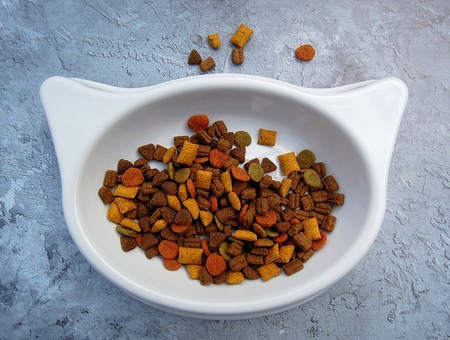 Dry Cat Food in a White Bowl
