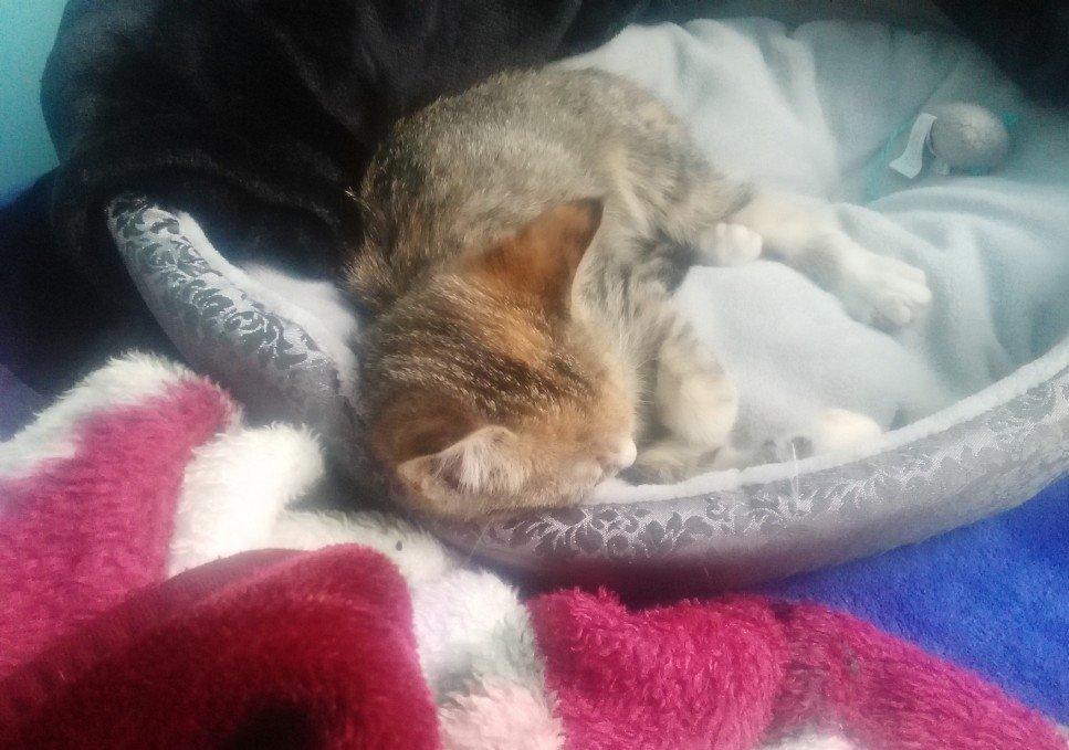 Kitten Daisy