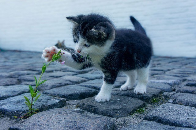 Black and White Kitten Playing with a Plant