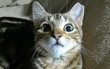 Marbles Face at Cat Predation Numbers