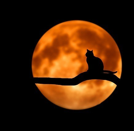 Shadow of a Cat in a Full Moon