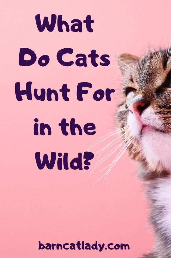 What Do Cats Hunt For in the Wild Graphic