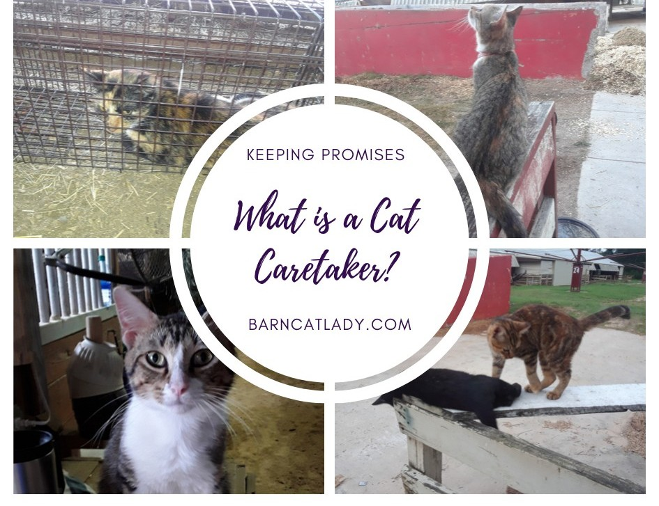What is a Cat Caretaker? (Should You Become a One?)