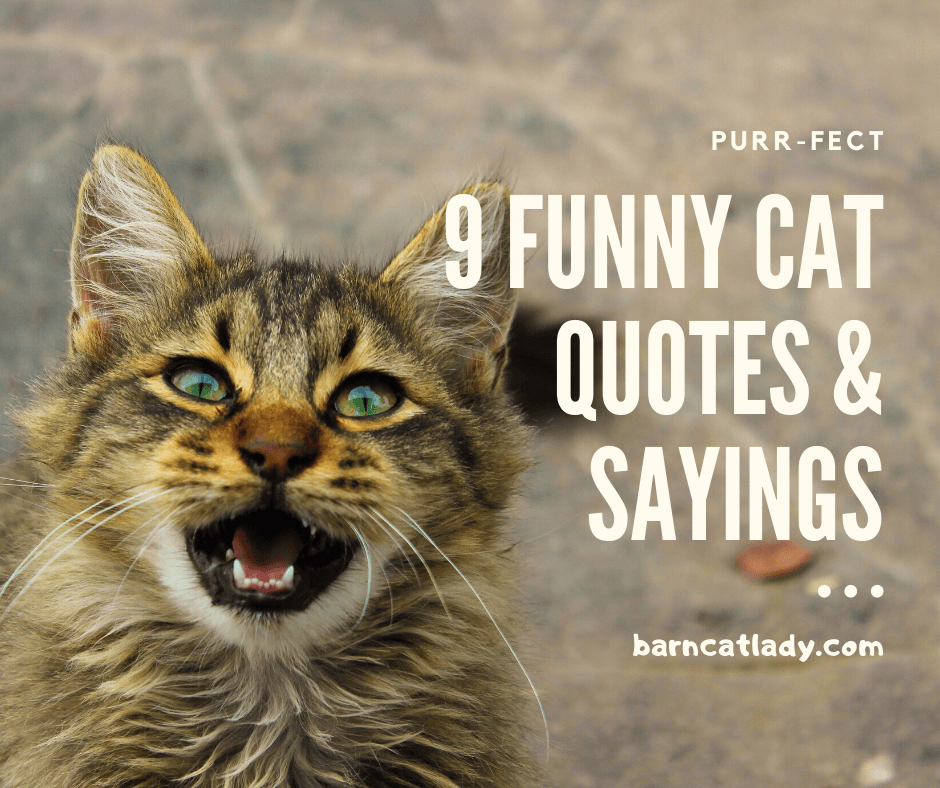 9 Funny Cat Quotes and Sayings Graphic