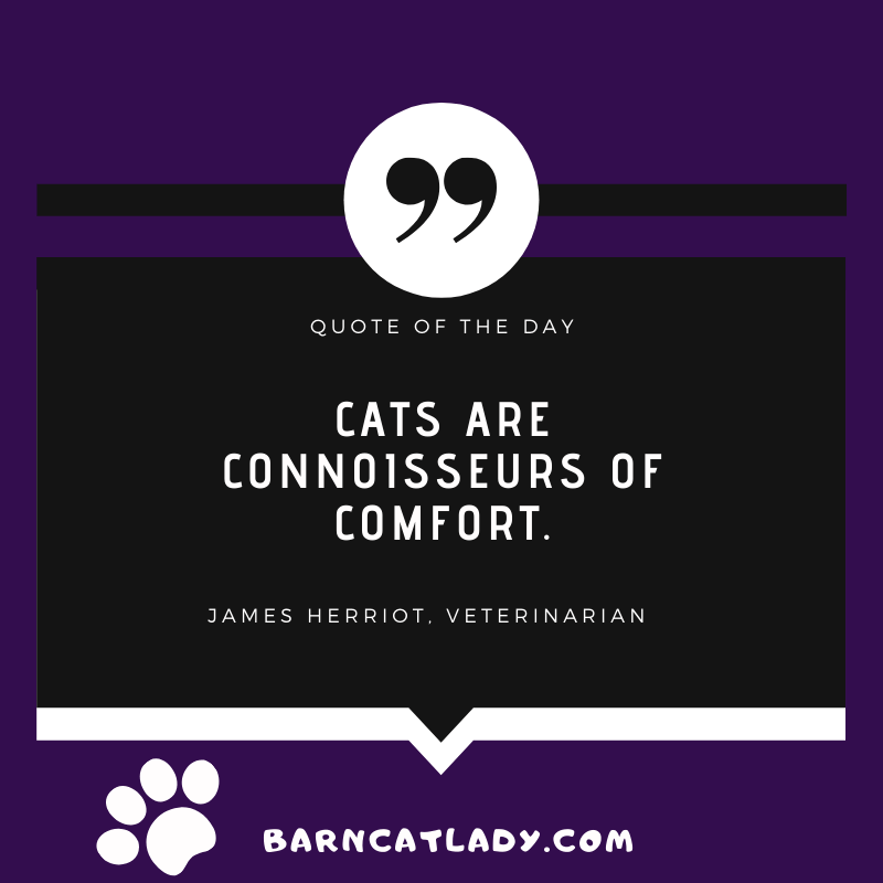 Cats are connoisseurs of comfort quote graphic.