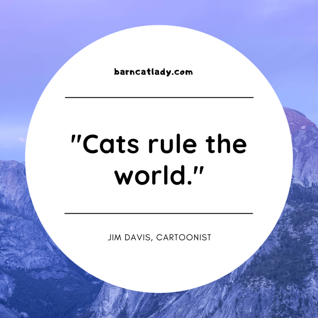 Cats rule the world graphic