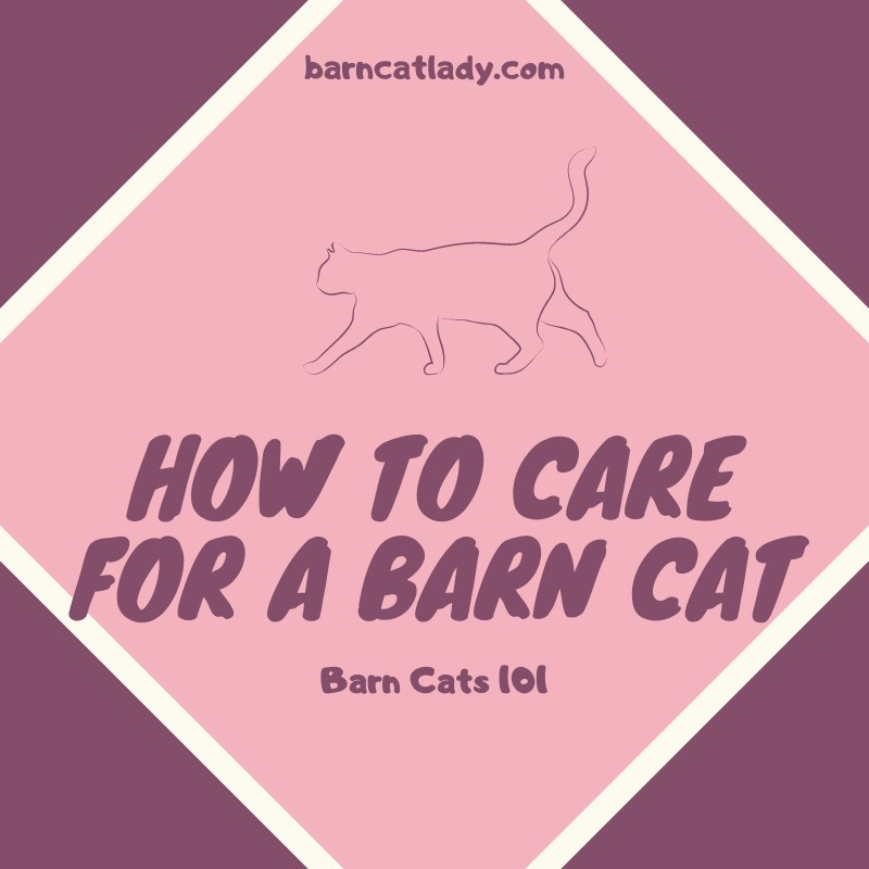 How to Care for a Barn Cat Graphic