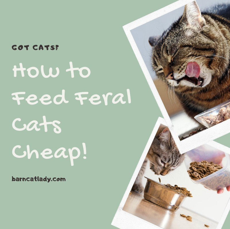Got Cats? How to Feed Feral Cats Cheap!