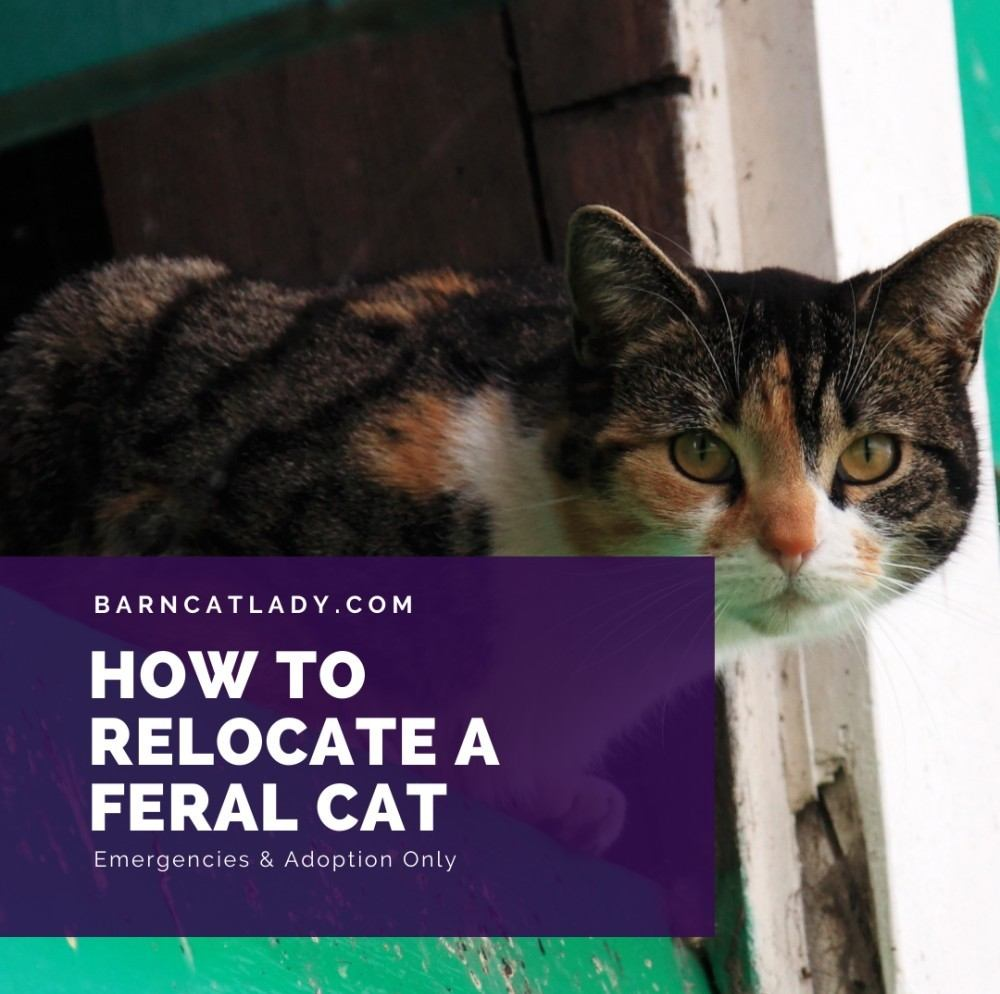 How to Relocate a Feral Cat