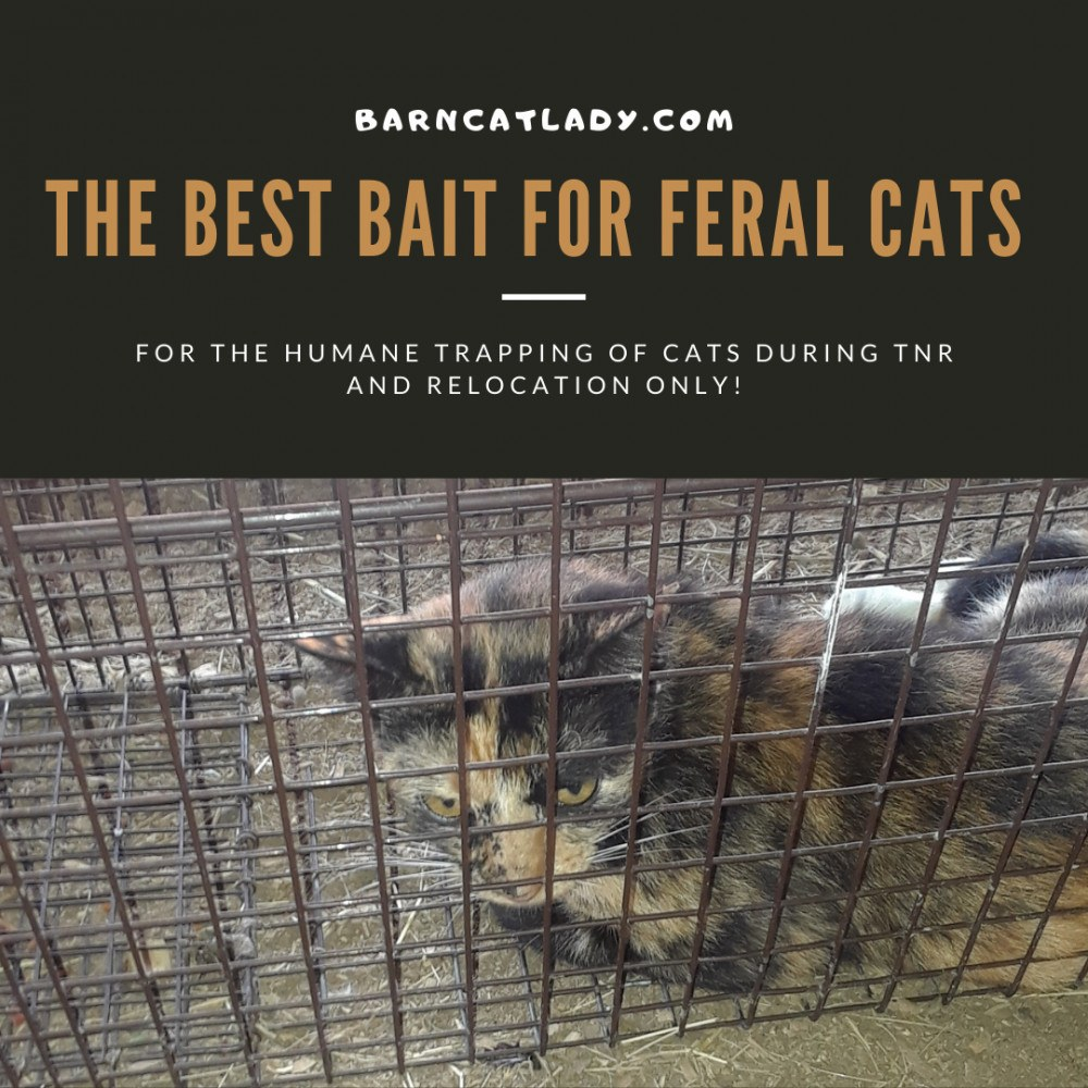 The Best Bait for Feral Cats Graphic