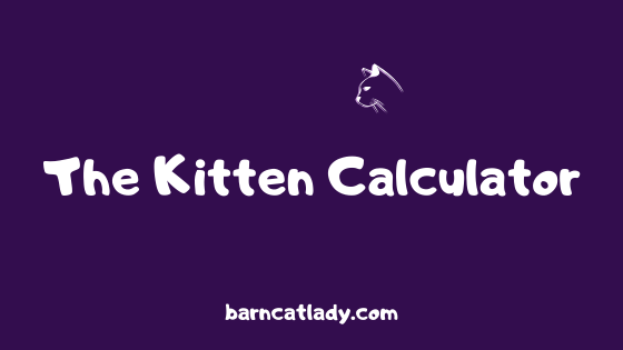 The Kitten Calculator Graphic