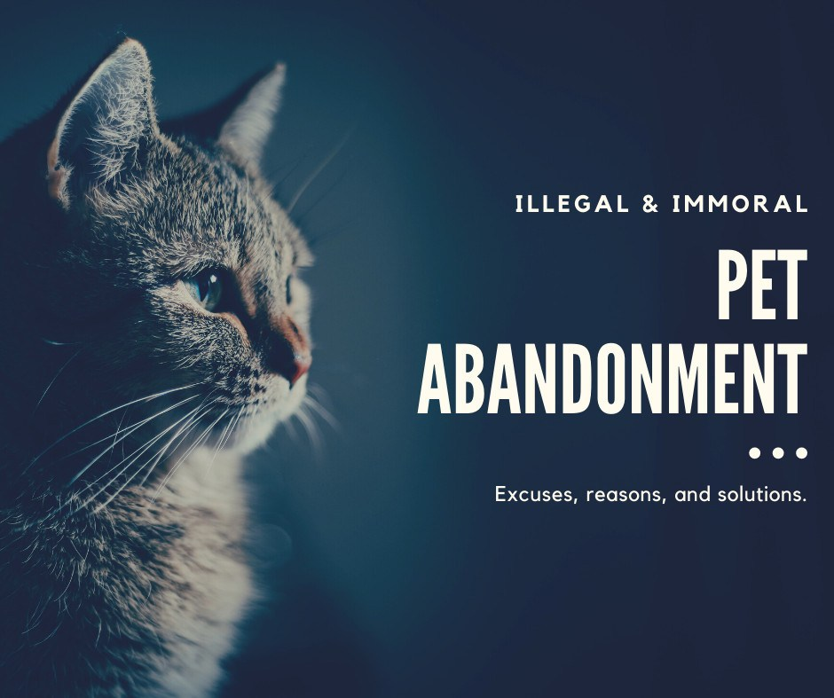 Illegal & Immoral: Pet Abandonment