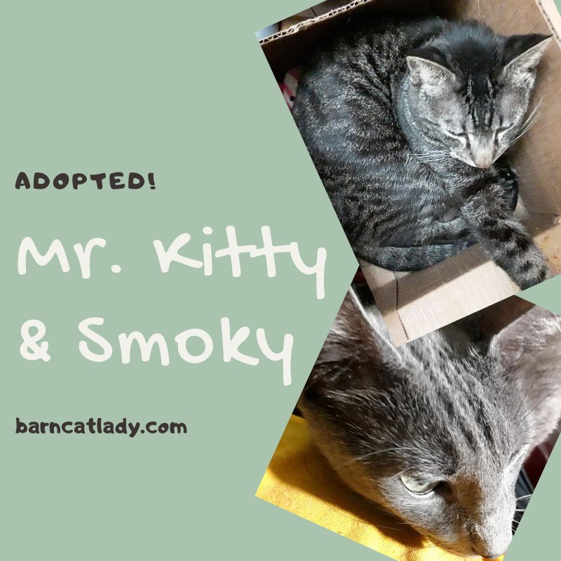 Mr. Kitty & Smoky Adopted!