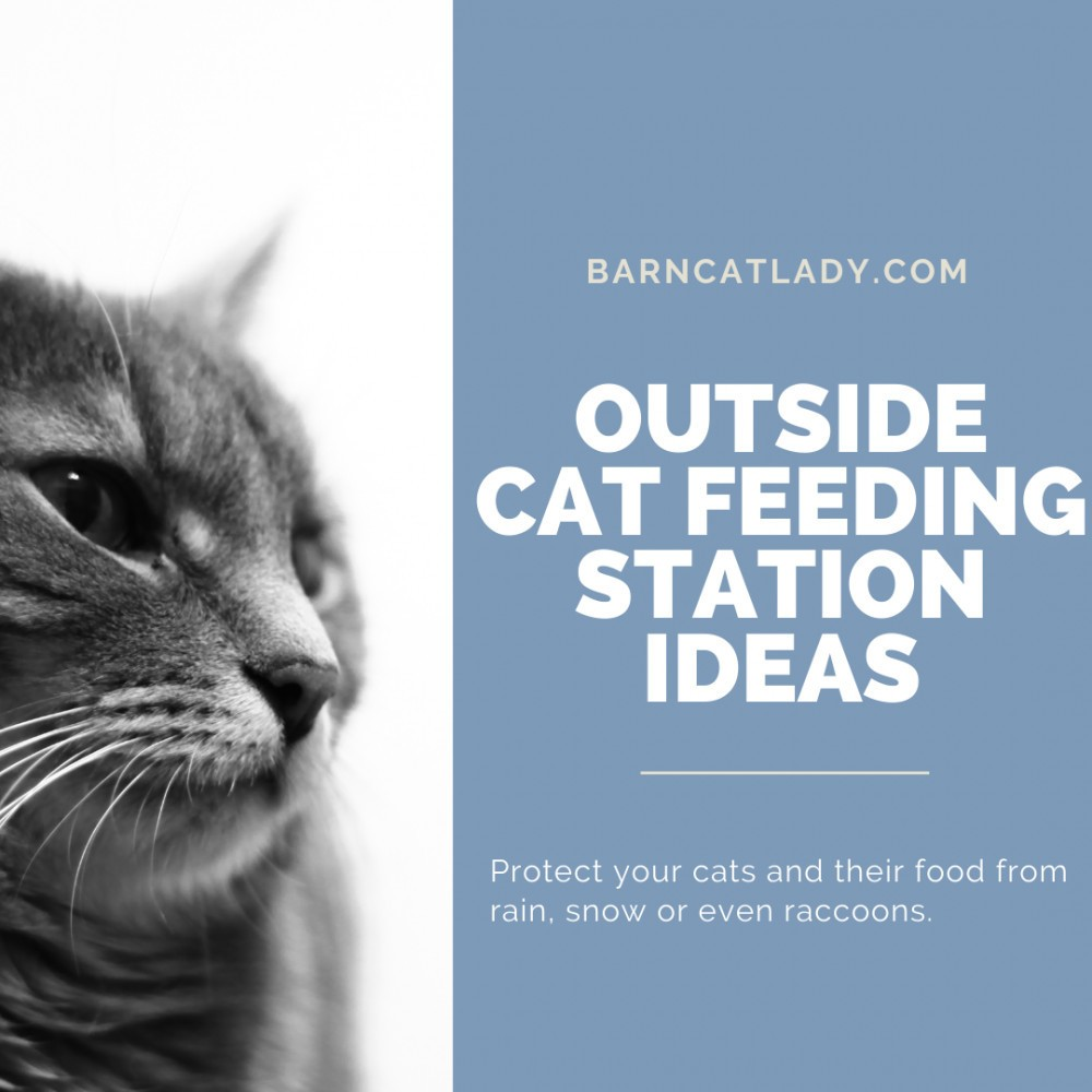 Outside Cat Feeding Station Ideas