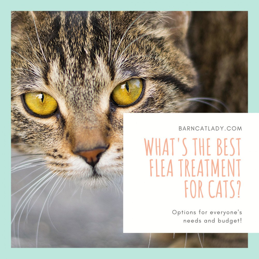 What's the Best Flea Treatment for Cats?