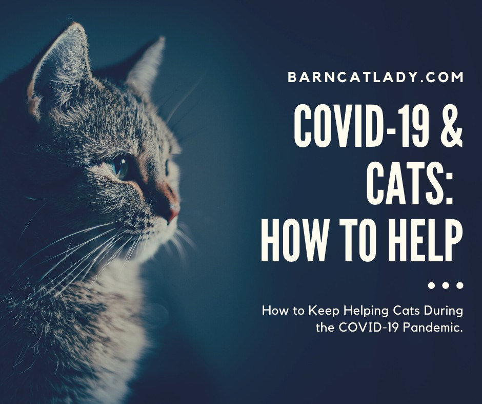 COVID 19 and Cats: How to Help Graphic