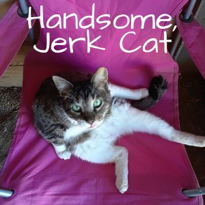 Handsome, Jerk Cat
