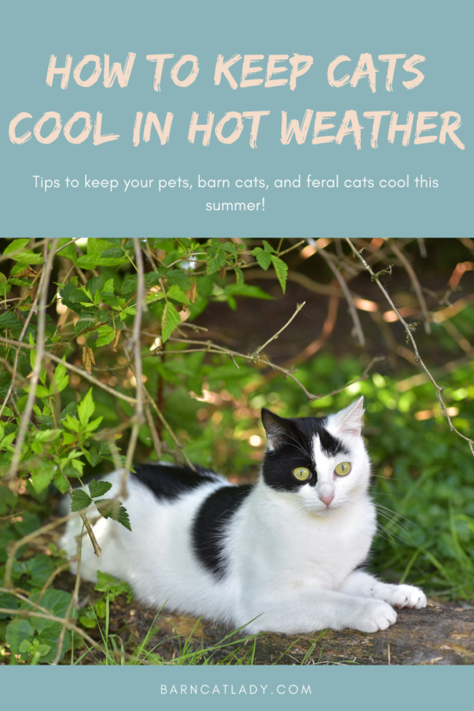 How to Keep Cats Cool in Hot Weather Graphic.