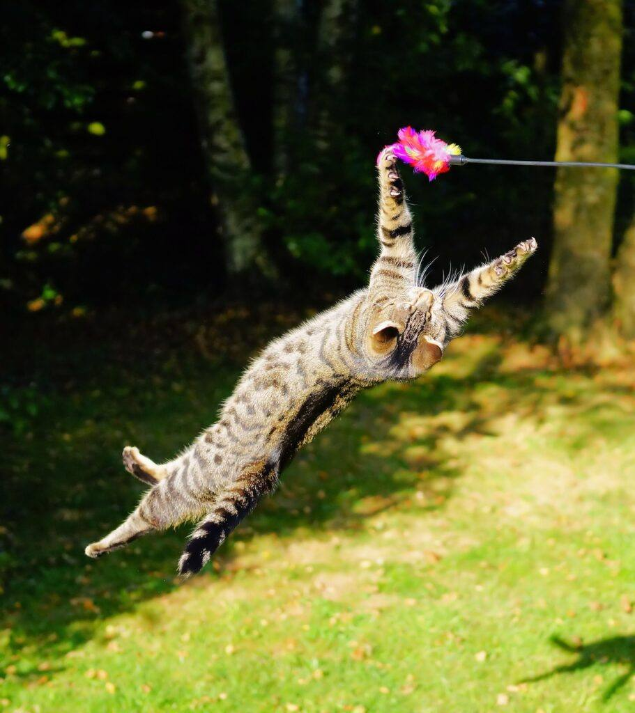 Flying cat chasing a wand toy in the yard.