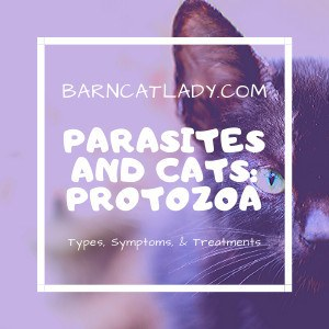 Parasites and Cats: Protozoa