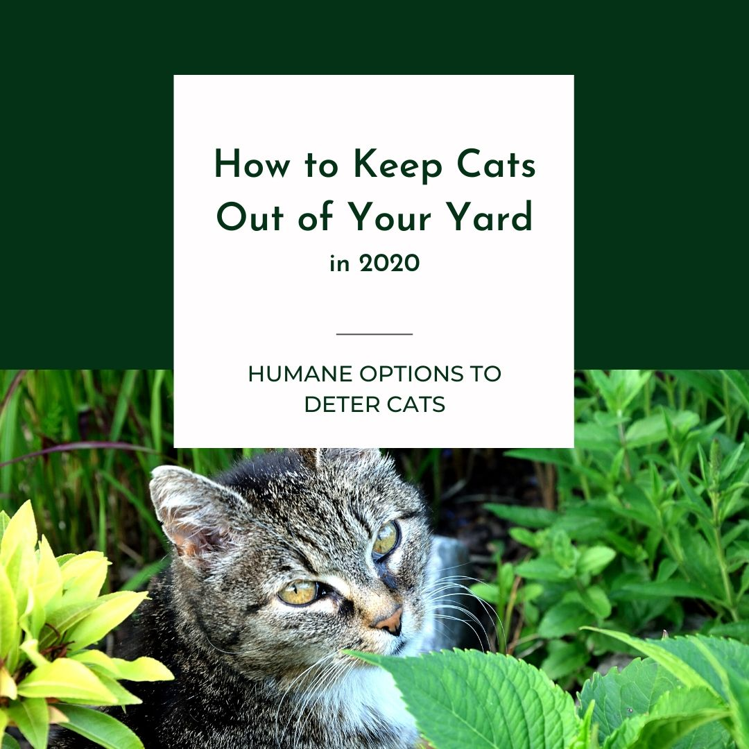 How to Keep Cats Out of Your Yard in 2020 Graphic