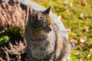 Tabby cat in a yard