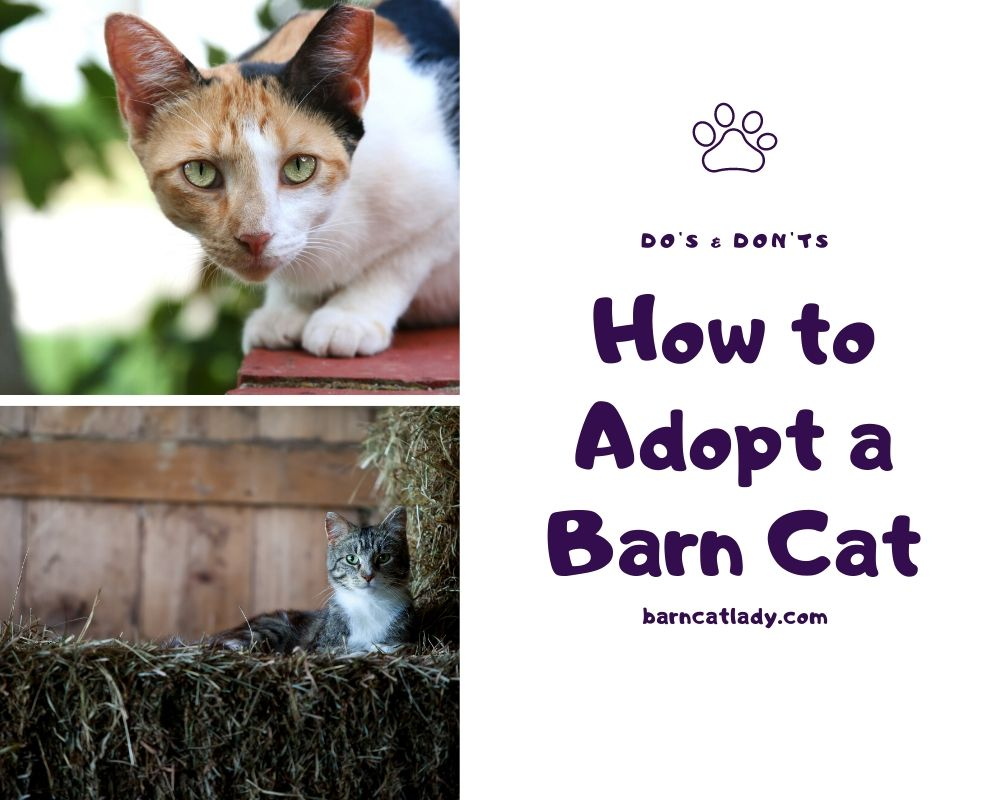 How to Adopt a Barn Cat Graphic