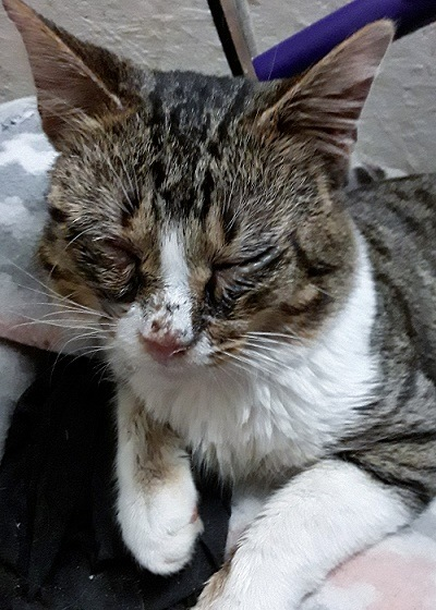 Sick Stubby, a tomcat with scratches on his face.