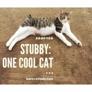 Stubby is One Cool Cat
