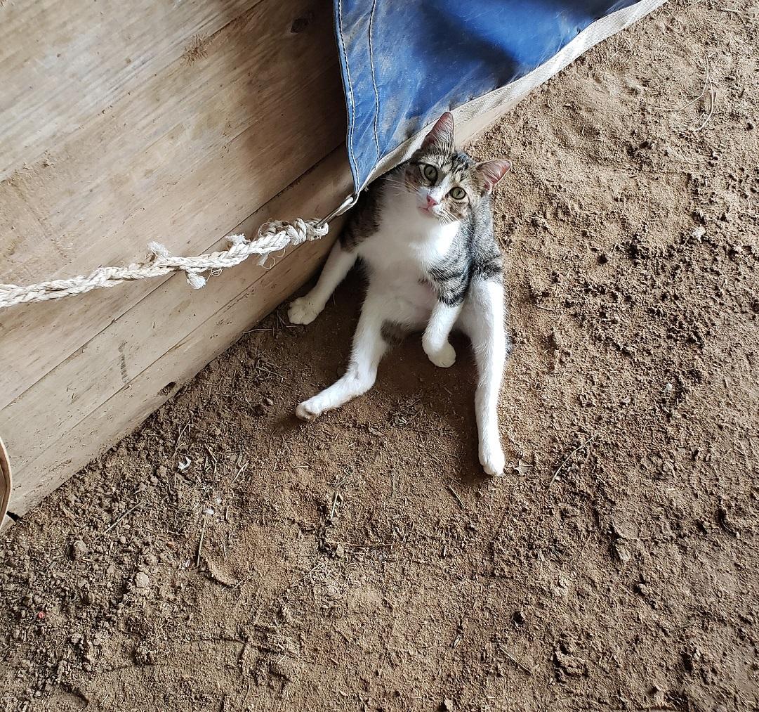 Stubby at the barns, looking up at the camera.