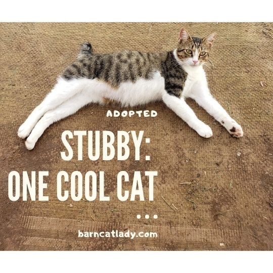 Stubby: One Cool Cat