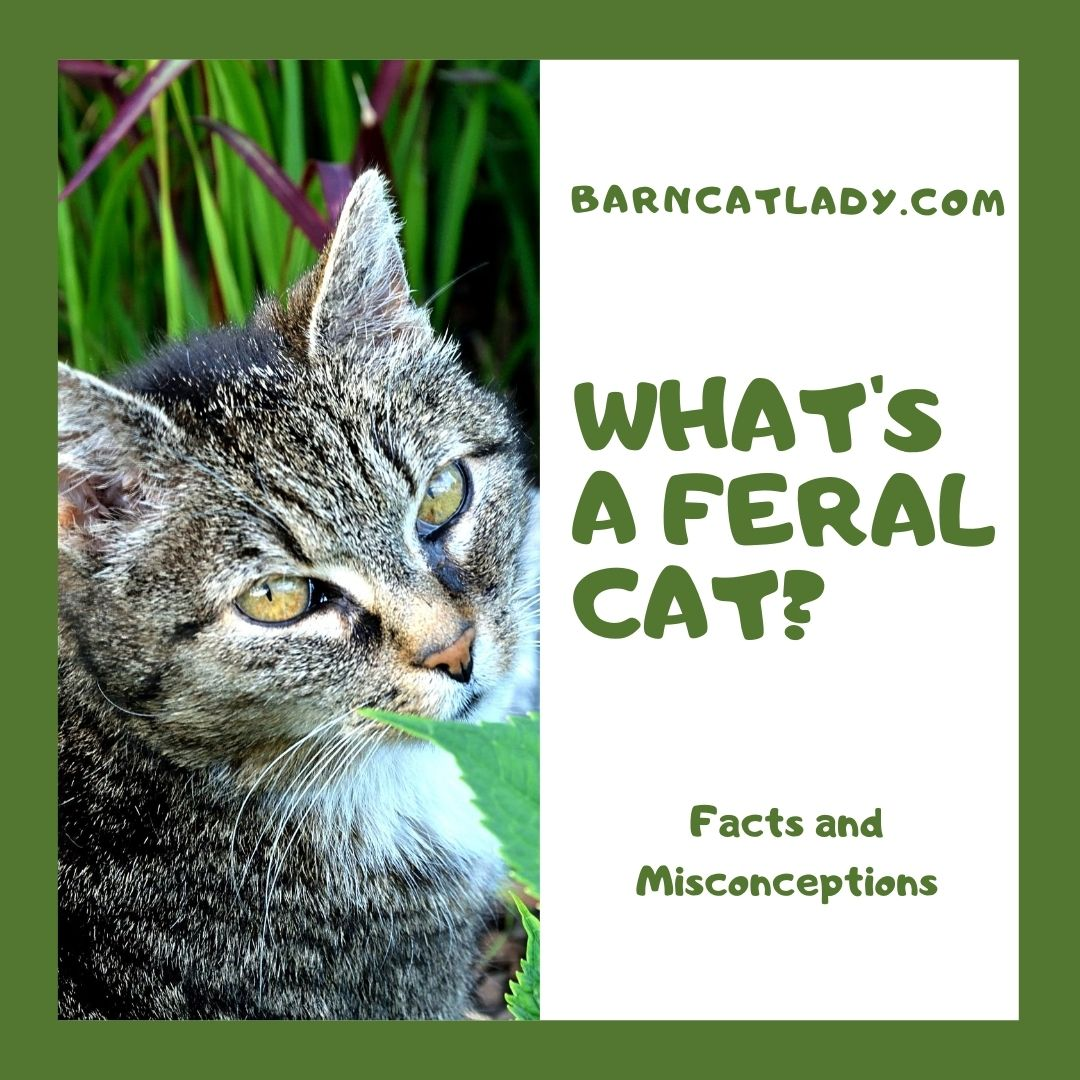 What's a Feral Cat?