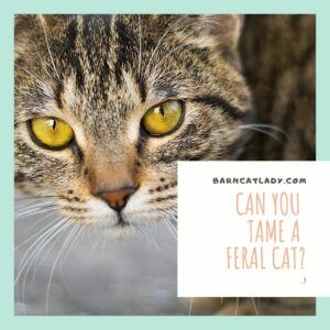Can You Tame a Feral Cat?