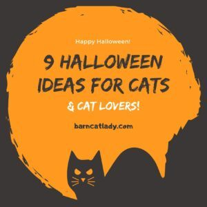 Halloween Ideas for Cats & Cat Lovers