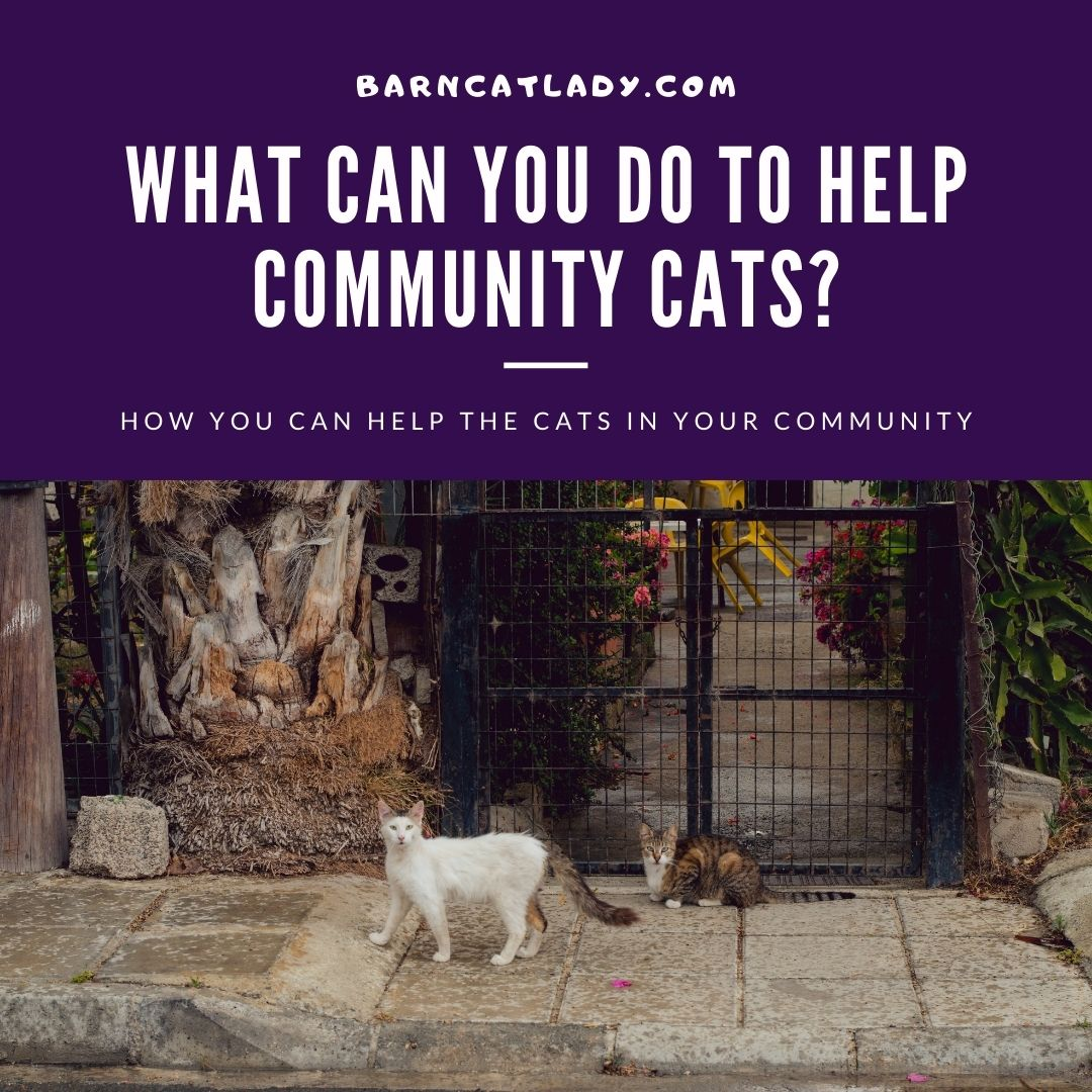What Can You Do to Help Community Cats?