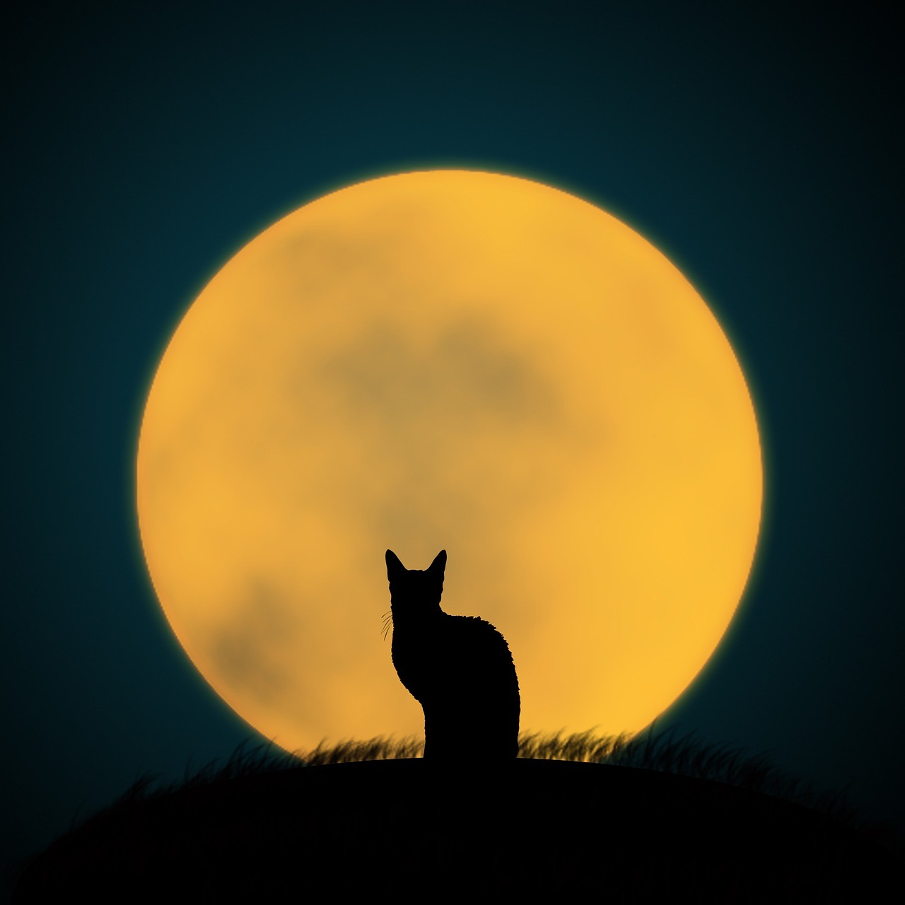 Halloween Cat with a Full Moon