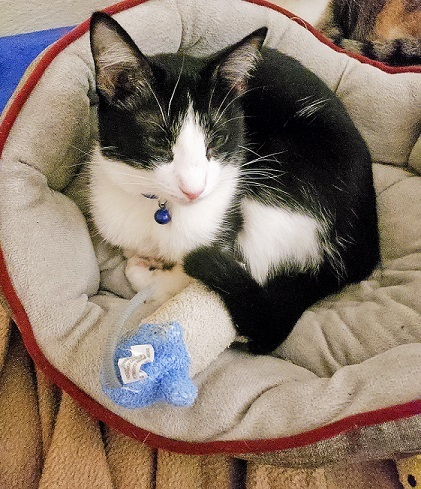 Cat cuddling with the mouse Itty Bitty Batters
