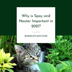 Why is Spay and Neuter Important?