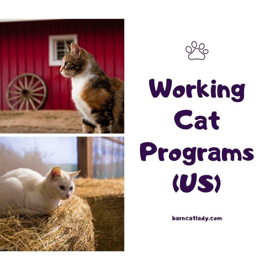 US Working Cat Programs