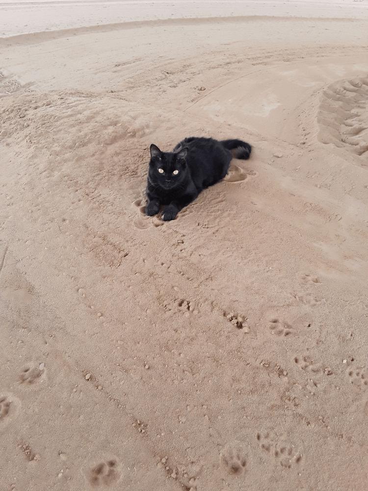 Peabody enjoying some sand.
