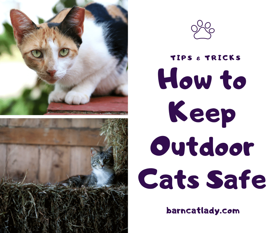 How to Keep Outdoor Cats Safe