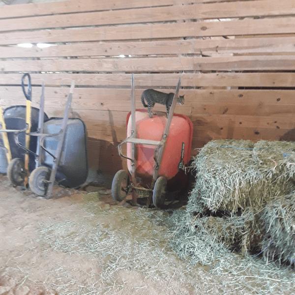 Tweety Standing On an Orange Wheelbarrow
